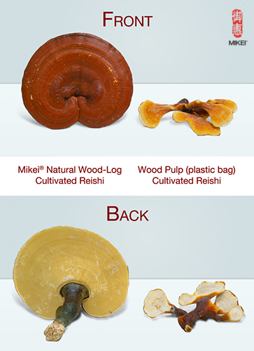 Wood pulp cultivated reishi